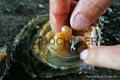 揭阳惠来用鱼缸海鲜池养殖(LD-1HP-A)冷水机 1