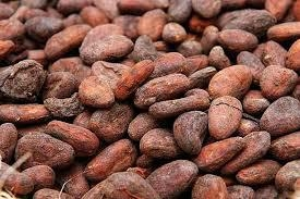 ARABICA AND ROBUSTA COFFEE BEANS, COCOA BEANS , COCOA POWDER 3