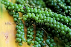 Vietnam Black pepper BEST PRICE
