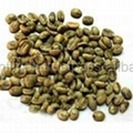 BEST PRICE HIGH QUALITY Vietnam ROBUSTA COFFEE BEANS 3
