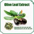 100% Natural Oleuropein Olive leaf