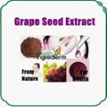 Grape Seed Extract Polyphenols & OPC 1
