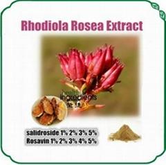 Rhodiola Rosea Extract Rosavin,salidroside
