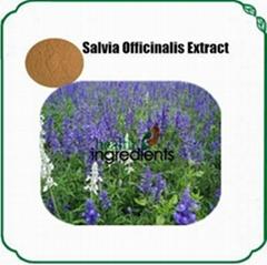Salvia officinalis extract Raw powder, ratio powder