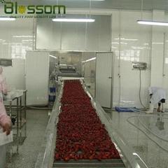 Frozen strawberry IQF strawberry