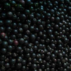 Frozen black currant IQF black currant