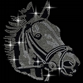 Colt and Horse Head Equestrian