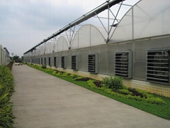 Decked Plastic Film Multi-span Greenhouse