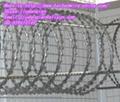 Spiral Razor Barbed Wire