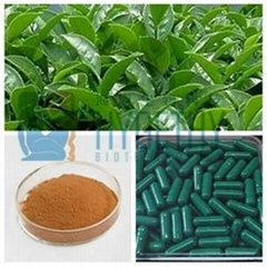 Herbal Extract Green Tea Powder