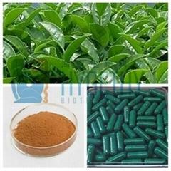 Herbal Extract Green Tea Powder