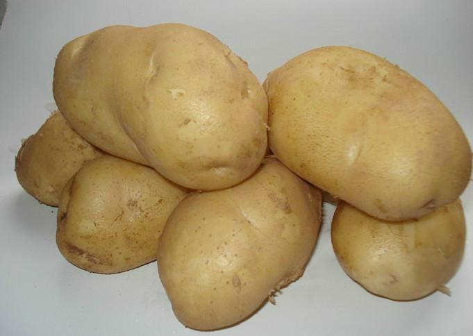 荷兰十五土豆种子 4