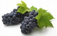 Grape Seed Extract Water-Soluble