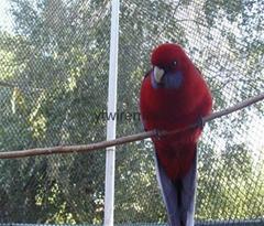 Bird Netting,Anti-bird Nets,Aviary Mesh