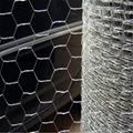ga  anized/pvc coated wire mesh netting