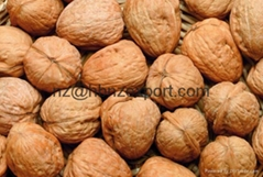 Walnut & Walnut Kernel (Fat type)