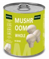 Canned Champignon Mushroom in Brine