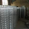 冷镀锌电焊网五厘米网孔 4