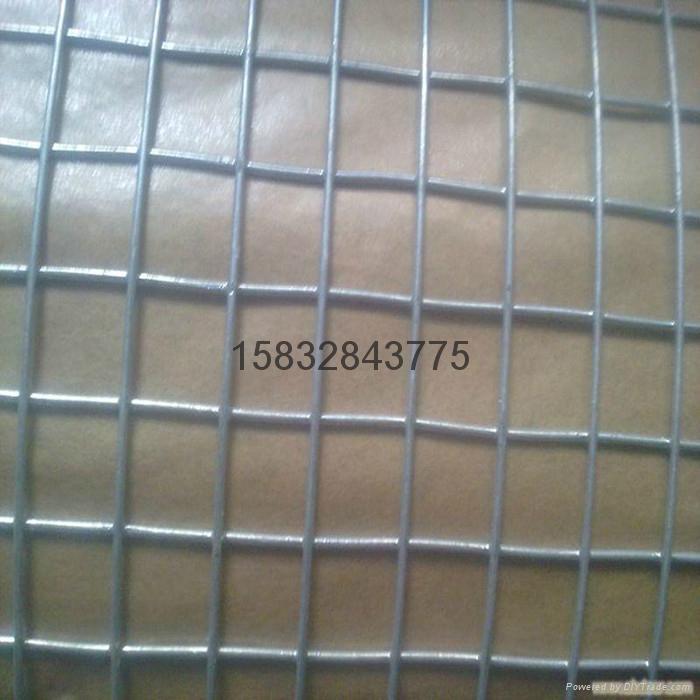 二点五厘米网孔镀锌电焊网 1