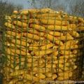 装玉米电焊网