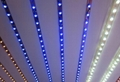 Colorful High Quality Safety Flexible LED Strip Light Water-Proof RGB SMD 4