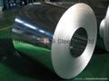 Galvanized Steel sheet/Coi