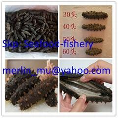 Frozen / dried sea cucumber( Apostichopus japonicu )