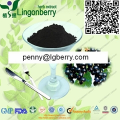 Black currant anthocyanin