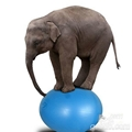 gym ball 4