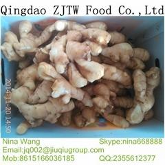 2014 fresh ginger