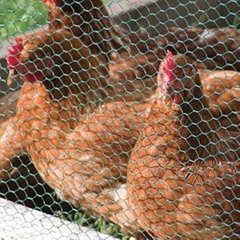 PVC Coating Chicken Wire - UV Stabilized and Durable