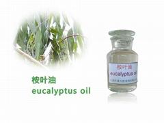 Organic Eucalyptus Oil
