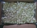 IQF Garlics