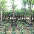 植樹控根器 4