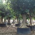 植樹控根器 5