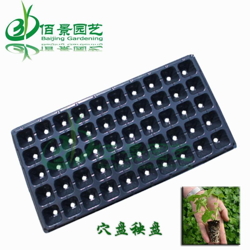 塑料育苗穴盘秧盘 1