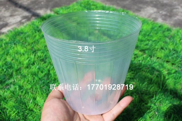 透明塑料營養缽育苗袋蝴蝶蘭專用 3