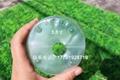 透明塑料營養缽育苗袋蝴蝶蘭專用 4