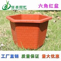 六角磚紋塑料花盆發財樹巴西木用盆