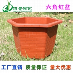 Hexagonal plastic flower pot for Pachira macrocarpa &braziletto