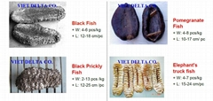 DRIED SEA CUCUMBER - ORIGIN: VIETNAM