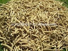 Chlorophytum Borivilianum Roots
