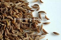Caraway Seeds & Essential Oil