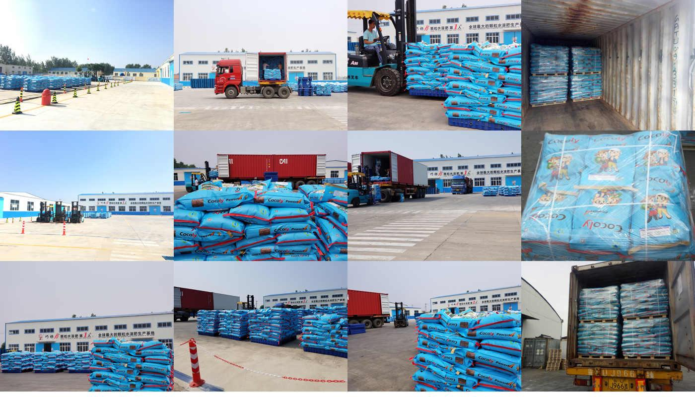 Agriculture fertilizer cocoly water soluble NPK 2