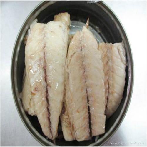canned mackerel loins in soybean oil 170G  2