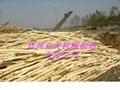 木材剥皮机 4