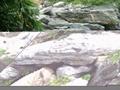廣東英石假山石 2