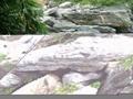 廣東英石假山石 3