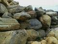 水系駁岸青石 4