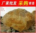 廣東陽春大型黃臘石